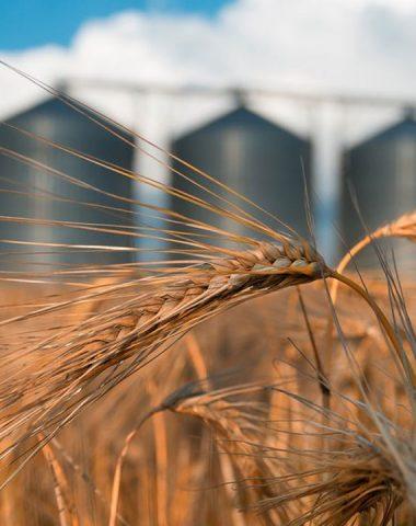 L'UE prépare l'après-Covid avec sa nouvelle stratégie agricole