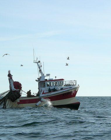 Pêche au cabillaud en mer Baltique : l'UE met le holà