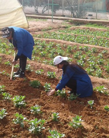 Agriculture : le Maroc cultive l'avenir