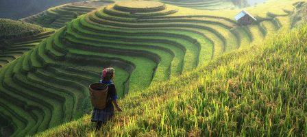 Chine, PAC, vieillissement : les nouveaux défis de l'agriculture