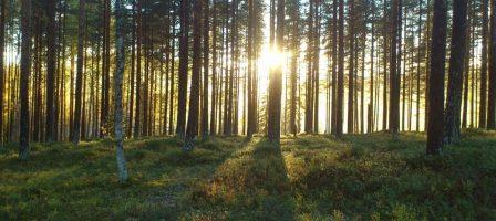 Cible de nombreuses critiques, les coupes rases sont-elles si néfastes pour la biodiversité et le climat ?