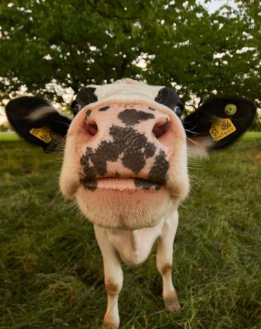Lubrizol s'engage à indemniser 453 agriculteurs