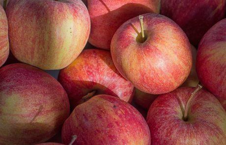 Apple contre Bruxelles : un partout, balle au centre